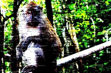 5 Affen