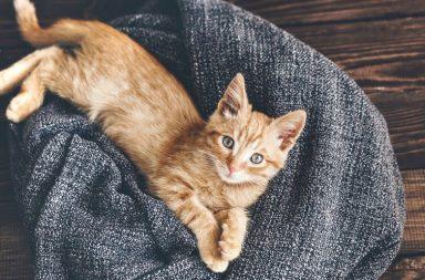Katze 10 Storytelling-Gebote