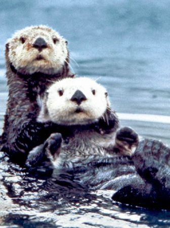 Die Story vom Seeotter